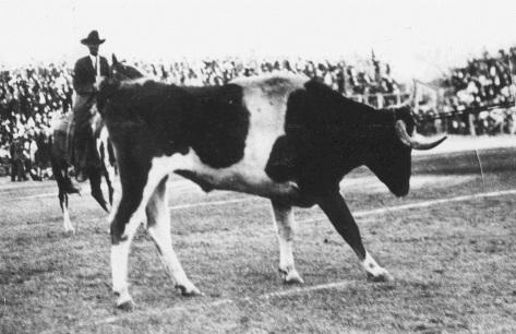 Bevo Halftime.Nov 30 1916.