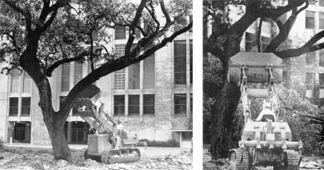 Stadium Tree Removal 1969