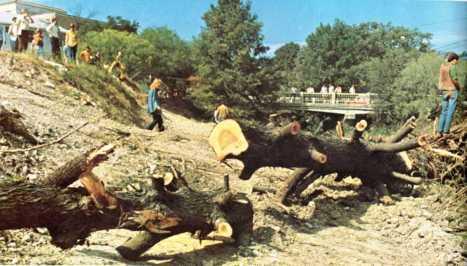 Waller Creek.Post Tree Removal.